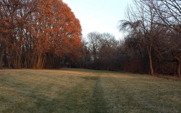 Dormant grass in winter