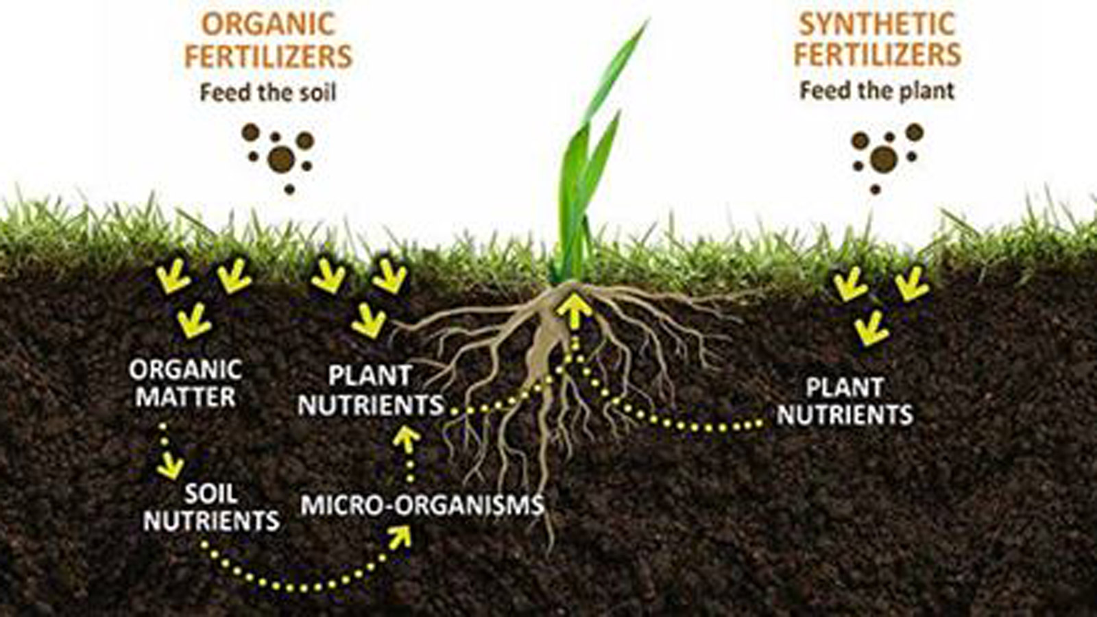 organic matter in soil bulk and granular compost for
