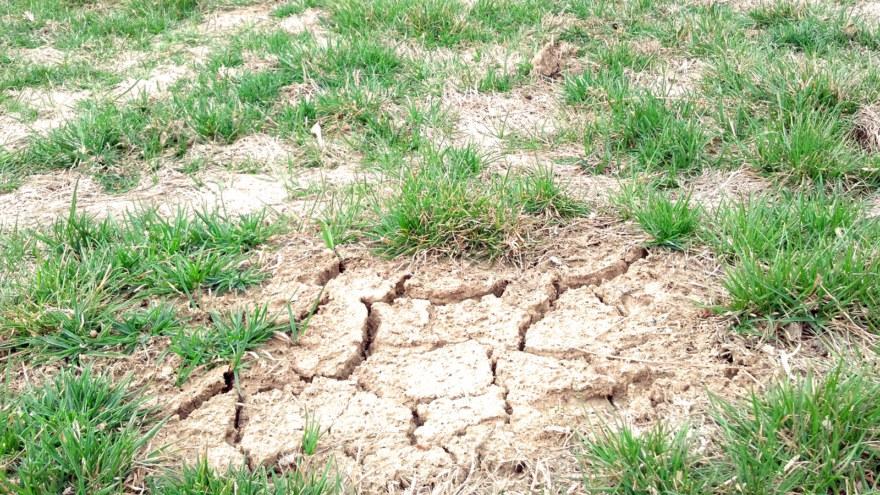 Temperature Induced Injury on turf