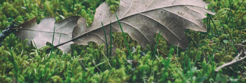 Moss Algea